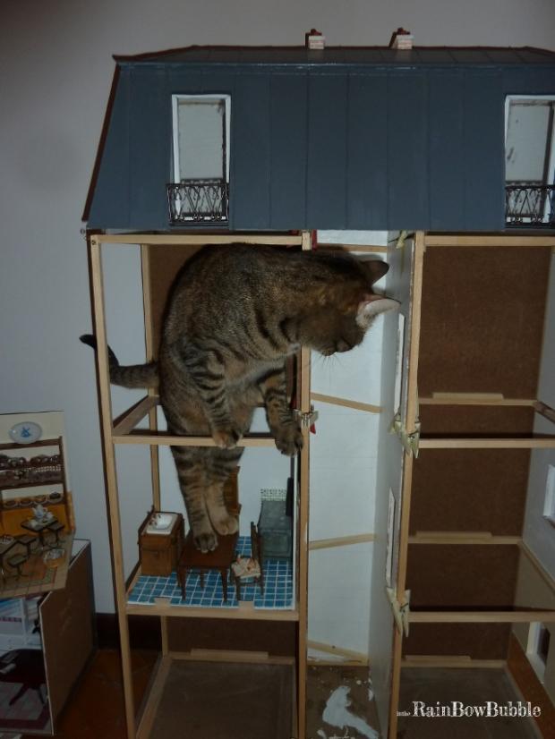 la struttura con una stanza inserita e il gatto che collauda...