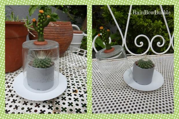 campana miniserra cactus