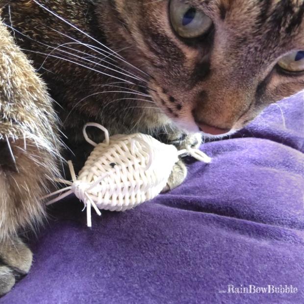 topolino intrecciato in midollino gioco gatto